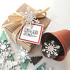 Blooming Seed Christmas Garden Set