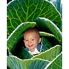 Your Photo in a Cabbage Baby