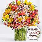 200 Blooms of Peruvian Lilies with Vase