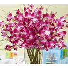 Extravagant Purple Birthday Orchids