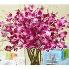 Extravagant Purple Birthday Orchids