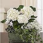 Tranquil White Garden Flower Arrangement for Sympathy