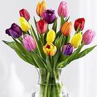 Make a Wish Multicolored Tulips