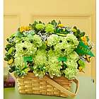 William and Mary Tribe Pride and Spirit aDOGable Bouquet