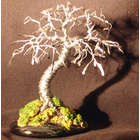 Wire Bonsai Tree Sculpture with Hammered Leaves