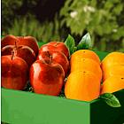 Apples & Oranges Gift Box