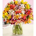 200 Blooms of Birthday Peruvian Lilies