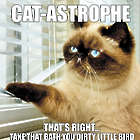 Cat-Astrophe Book