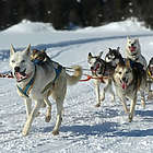 Dar Forest Dog Sled Tour