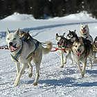 Dar Forest Dog Sled Tour