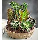 Large Cactus Dish Garden