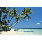 Tropical Beach Backdrop Banner