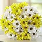 Yellow & White Daisy Bouquet