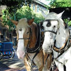 Scenic Cruise to Historic Savannah