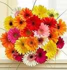 24 Stems Gerbera Daisy Bouquet