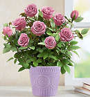 Lavish Lavender Rose Plant in Ceramic Planter