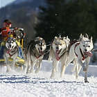 Park City Dog Sledding Tour