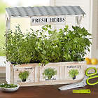 Herb Garden Trio with Planter and Scissors