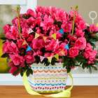 Pink Pop Birthday Azalea Plant
