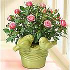 Pink Roses in a Love Birds Planter