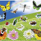 Design Your Own! Real Bugs and Flowers Sticker Scenes