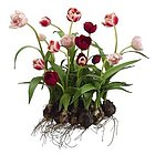"17"" Pink & Red Artificial Tulip Arrangement with Flower Bulbs"