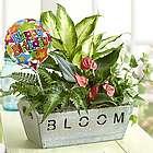 Happy Birthday Tropical Foliage Garden