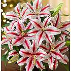 Candy Cane Lilies Bouquet