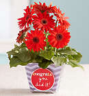 Congrats You Did It Gerbera Daisy Plant