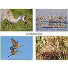 Sandhill Cranes Photo Note Cards