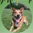 Dog Memorial Personalized Photo Ornament