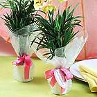 Mini Palm Plant Favors with Ribbon