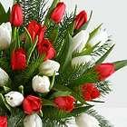 30 Christmas Tulips with Fresh Douglas Fir Floral Bouquet