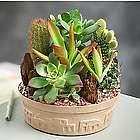 Small Cactus Dishgarden