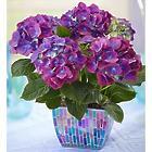 Sympathy Hydrangea Flowers in Mosaic Planter