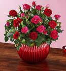 Breathtaking Bi-Color Blooms Mini Rose Plant