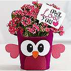 Owl Always Love You Flower Plant