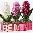 Be Mine Ombre Flower Trio