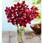 Fresh Market Orchid Bouquet with Vase