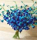 20 Stems Ocean Breeze Blue Orchids