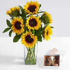 Sunflower Radiance Bouquet with Square Glass Vase and Chocolates