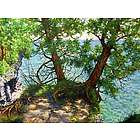The Natural Beauty of Cave Point Door County Giclee Art Print