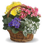 Spring Has Sprung Planter Basket