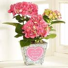 All Things Grow With Love Hydrangea