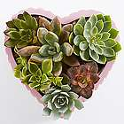 Happy Heart Succulent Garden