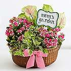 Mom's Perfectly Pink Garden in Basket Planter