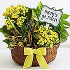 Sunshine and Joy Garden for Mom