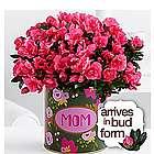 A Burst of Love For Mom Hot Pink Azalea Plant