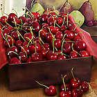 Sweet & Succulent Summer Bing Cherry Gift Box