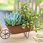 Succulent Plants in Wheelbarrow Planter